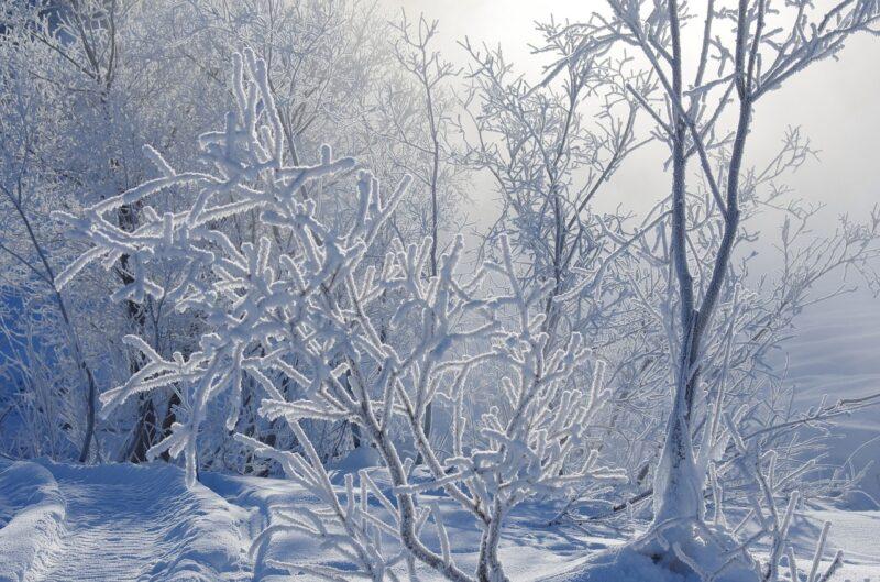 winter 2644107 1280 Cronos Asia
