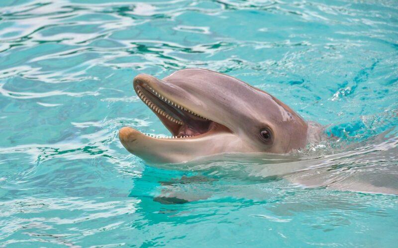 dolphin 3416508 1280 Cronos Asia