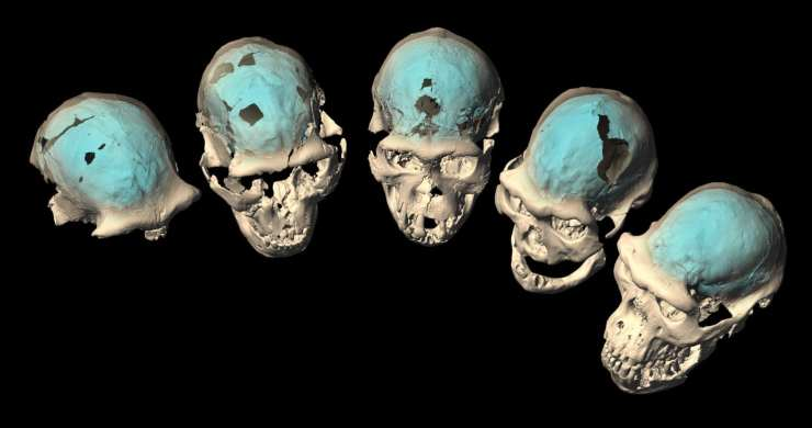 1617978211 870 chelovecheskij mozg razvilsja ne bolee 17 milliona let nazad v Cronos Asia