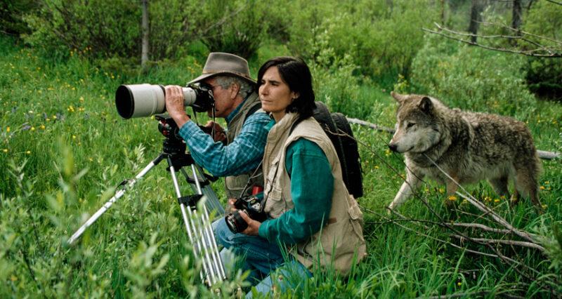 1 wild wolves Cronos Asia