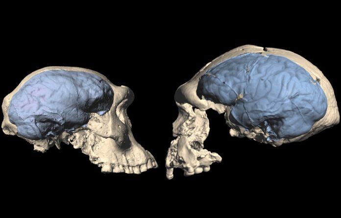 skull0 696x445 1 Cronos Asia
