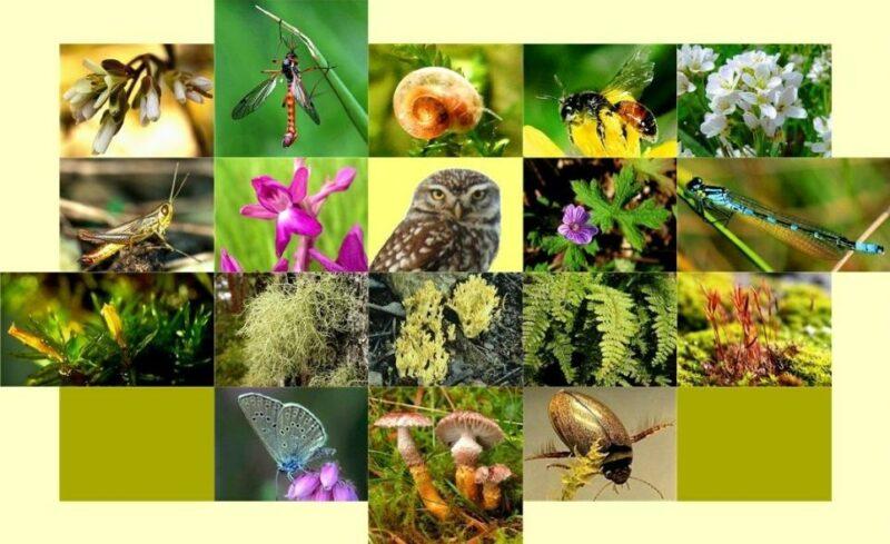 biodiversity 150113069B238BAAE55 Cronos Asia